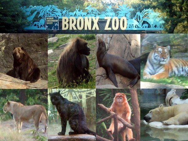 Bronx Zoo 5 18 19 Foxy Travel